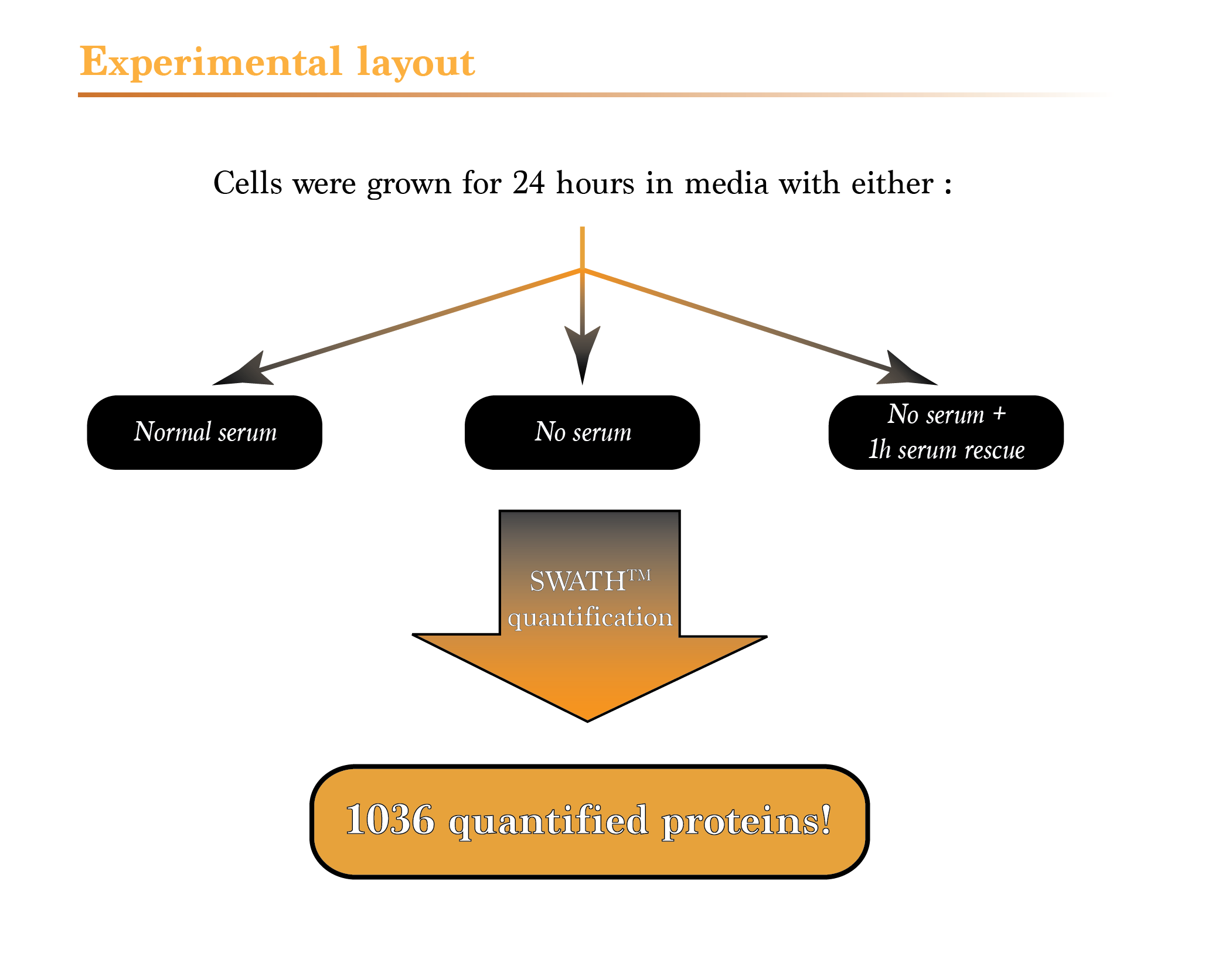 Proteomics services mass spectrometry